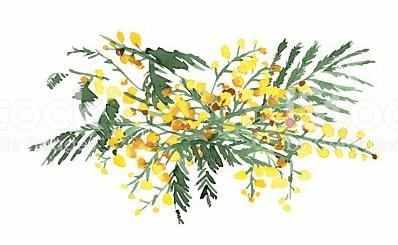 mimosa-3.PNG